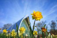 RHIT_Campus_White_Chapel_Tulip_View-2692.jpg