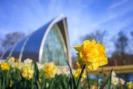 RHIT_Campus_White_Chapel_Tulip_View-2655.jpg