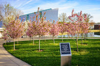 RHIT_Campus_White_Chapel_Cherry_Blossoms-2754.jpg