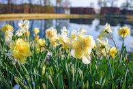 RHIT_Campus_Speedd_Lake_Tulip_View-2670.jpg