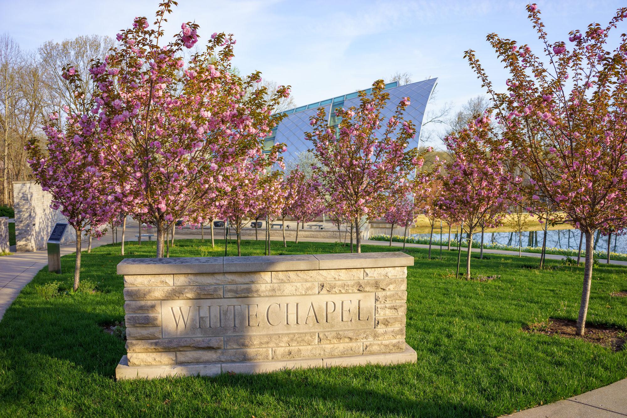 RHIT_Campus_White_Chapel_Cherry_Blossoms-2624.jpg